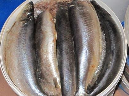 Сельдь слабой соли (5 кг.)